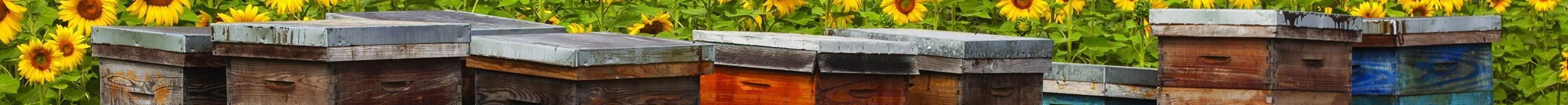 Récoltes (miel, propolis, pollen)