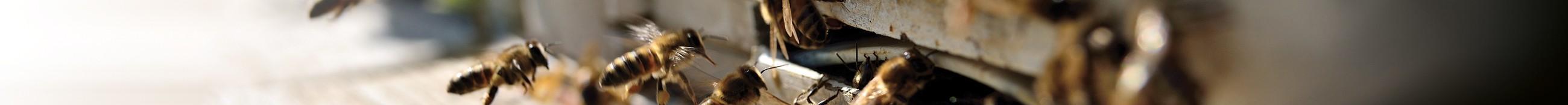 Paquets d'abeilles